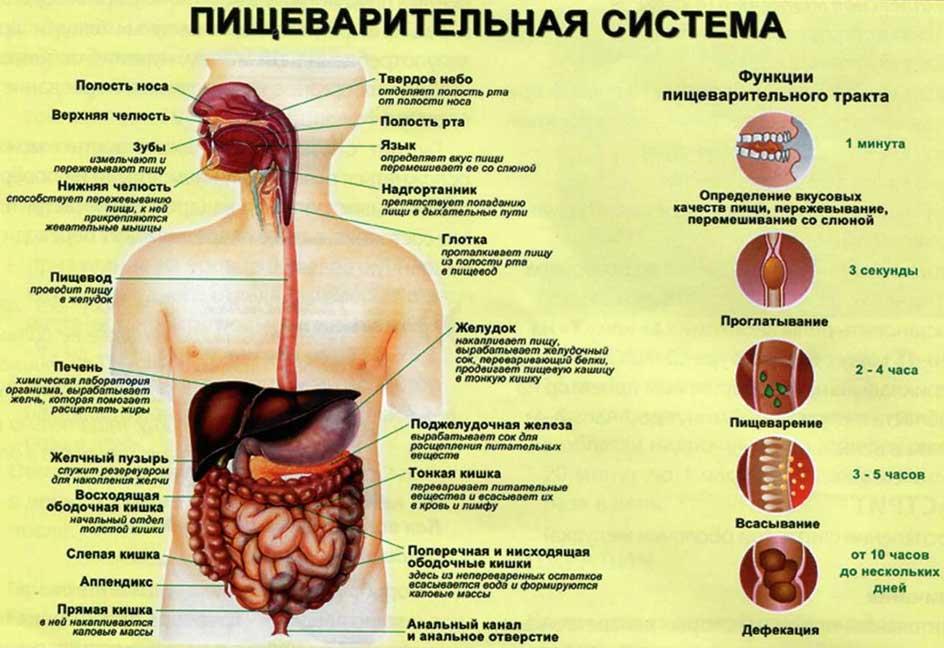 Упражнения от боли в пояснице лечение
