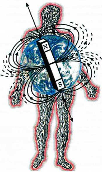 Магнитные поля человека