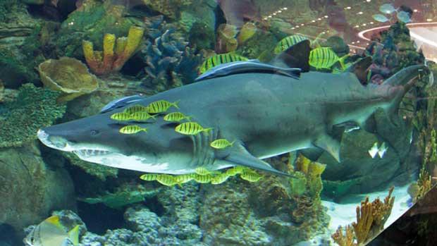 аквариумная терапия