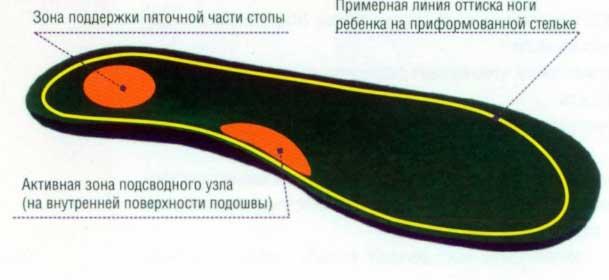 анатомический следок